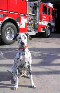 Wilshire The Fire Dog